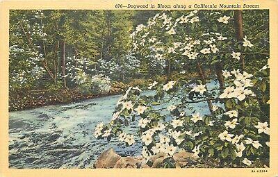 Linen Postcard CA J418 Dogwood in Bloom along a California Mountain Stream (Dogwood Ca)