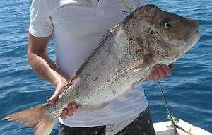 FISHING MATE WANTED Fremantle Fremantle Area Preview