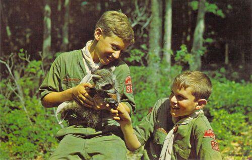NY Narrowsburg TEN MILE RIVER BOY SCOUT CAMPS MINT Raccoon postcard BS1