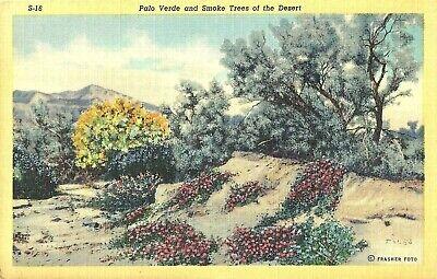 1946 Palo Verde Smoke Trees of the Desert Linen Frasher Postcard  Posted Arizona