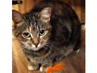 Amber needs a loving, safe home