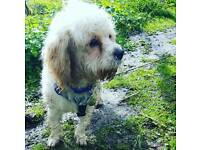 Dog Walker Available Braintree Essex