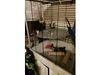 Male rats and cage