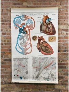 Vintage 1918 American Frohse Anatomical Charts. FULL SET!