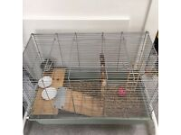 Pet rats coming with cage
