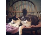 Male neutered brothers need a new home