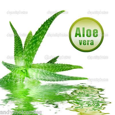 Aloe Vera Gel 50g - 5kg