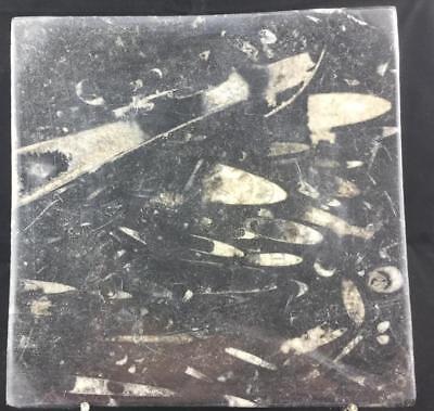 SQUARE BLACK ORTHOCERAS & AMMONITE FOSSIL DISH FROM MOROCCO - TRILOBITE AGE #6