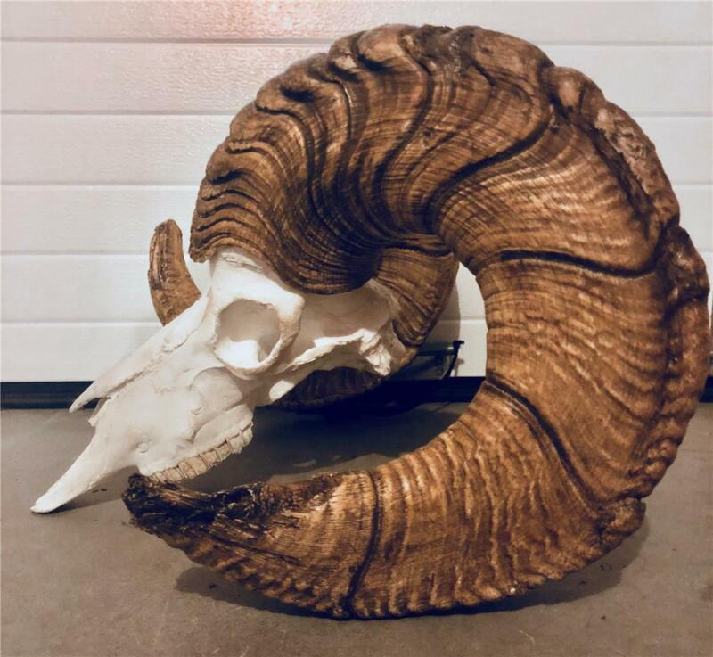 giant  Dall Sheep repro  Horns Antler Deer Antlers Taxidermy