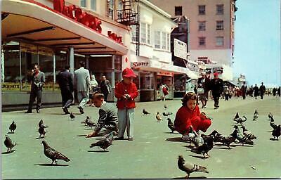 Atlantic City NJ Kids feeding Pigeons Postcard unused (Kids Atlantic City)
