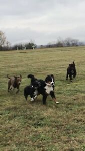 Group Dog Walks-1.5hrs off leash-$17.00!!