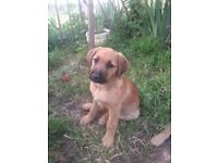 Puppy ''Lua'' for adoption - save a life (18/7: ADOPTED)