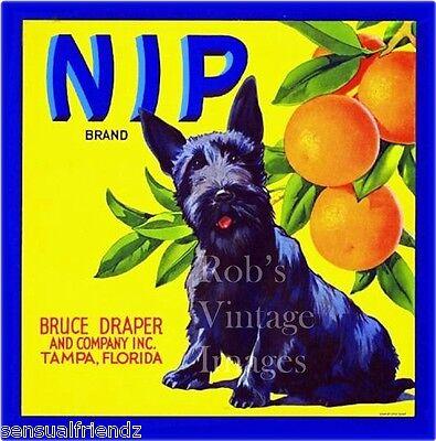 Tampa Fl Nip Scottish Terrier Dog Orange Crate Label Art Print Bruce Draper Co   for sale  Theresa