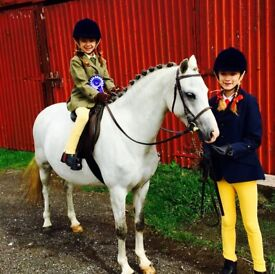 One in a million 12.3hh section B mare