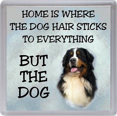 "Bernese Mountain Dog Coaster ""Home is Where the Dog Hair Sticks ."" by Starprint"