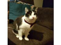Missing Cat in Southsea
