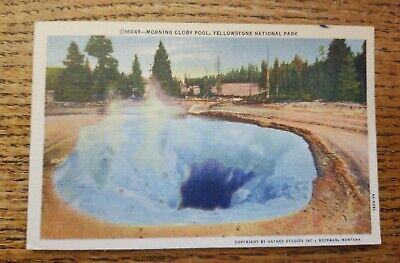 Vintage Yellowstone Park Morning Glory Pool Postcard 50's ()