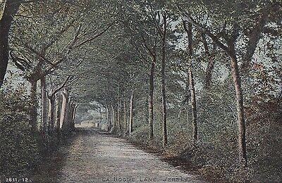 CJ26. Vintage Postcard. La Hogue Lane, Jersey. Tree lined road.Channel Islands