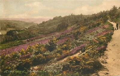 s09541 Nutcombe Valley, Hindhead, Surrey, England postcard unposted