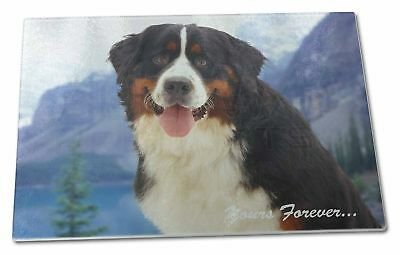 Bernese Mountain Dog Extra Large Toughened Glass Cutting, Chopping, AD-BER6yGCBL
