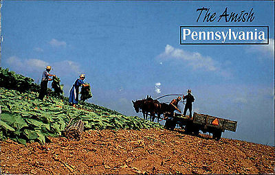 Pennsylvania Amerika USA 2001 Amish Harvest Time Erntezeit Ernte Ethnic Tracht