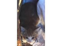 last ginger kitten