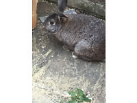 A lovely rabbit