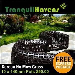 10 x 140mm Korean No Mow Grass $90.00 Free Delivery Brisbane City Brisbane North West Preview