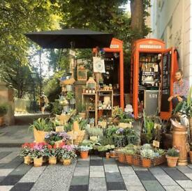 Brighton Florist business For Sale