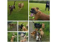 Dog Walking, Pet sitting & Home Boarding