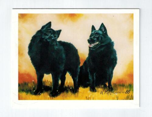 New Schipperke Pair Notecard Set 12 Notecards Envelopes By Ruth Maystead SCP-1