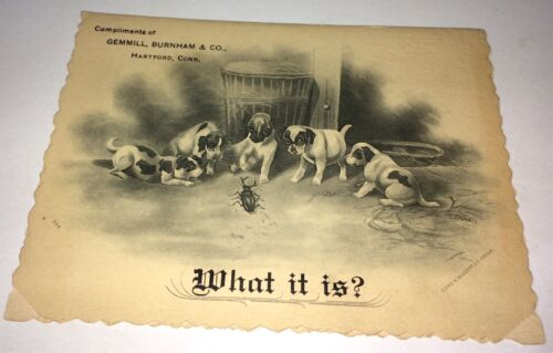 Rare Adorable Victorian American Adorable Dogs Advertising Trade Card! C.1893 CT