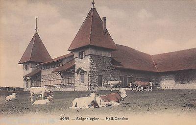 Saignelègier Jura AK 1909 Hall-Cantine Kühe Schweiz Suisse Svizzera 1603389