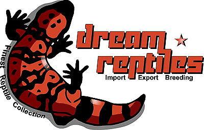 Dream Reptiles Shop