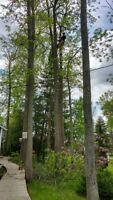 Tree cutting, pruning, removal etc