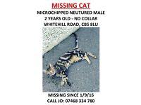 Missing Cat - CB5 Cambridge