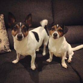 Scrappy & Scooby need loving homes