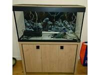 Tropical/ fresh water fish tank full set up