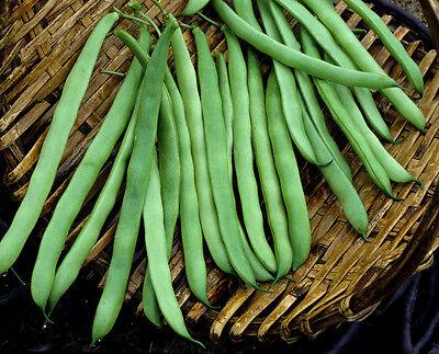 Bean Seeds  Kentucky Pole Beans  Heirloom Pole Bean  Green Beans  Non Gmo  75Ct