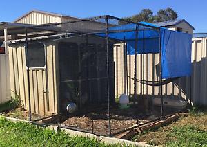 Cat enclosure/ chook run/ aviary Greta Cessnock Area Preview