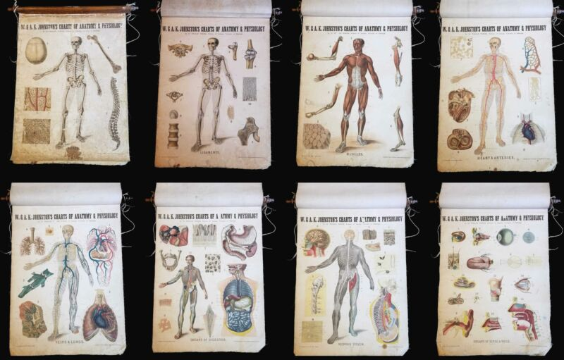 1903 Set of 8 Johnston Charts of Human Anatomy and Physiology