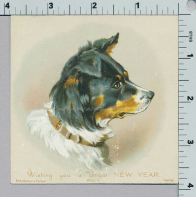Maguire Collie Dog New Years Hildesheimer Faulkner 343 A