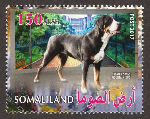 GREATER SWISS MOUNTAIN DOG ** Int