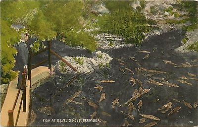 Vintage1907-1915 Printed Postcard; Fish at Devil's Hole, Bermuda, Unposted