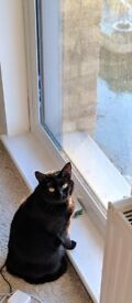 Adorable female cat looking for a new owner