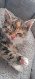 😻 Kittens For Sale 😻
