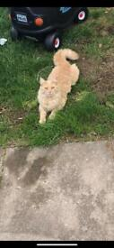 LOST CAT - SNOW
