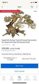Bonsai tree with moos ,
