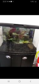 Fish tank with stank gravel light and pumb