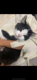 Lovely affectionate kitten
